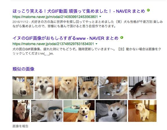 犬の画像検索結果
